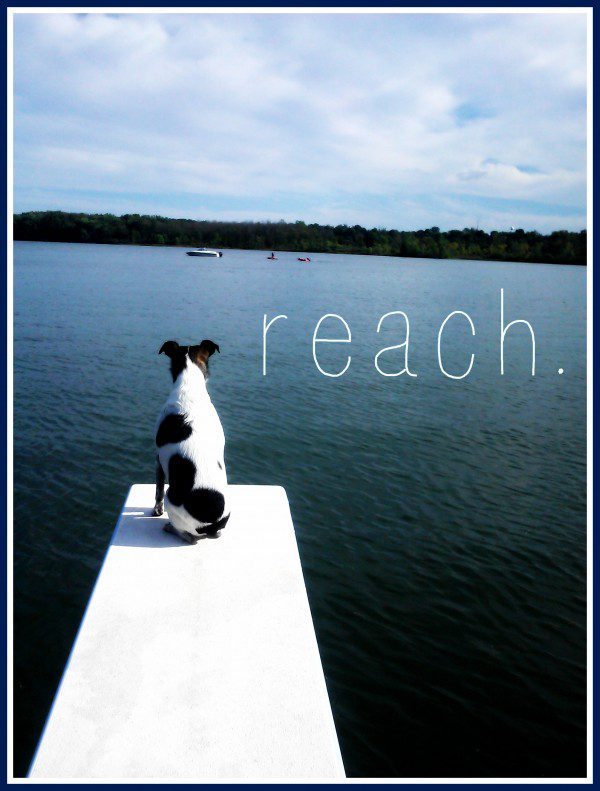 FMF - Reach