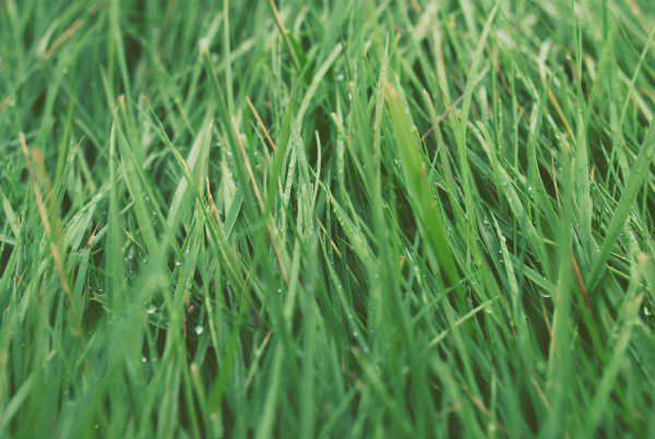 grass - unsplash