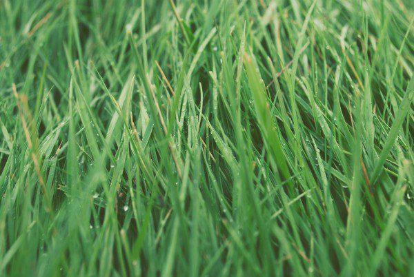 grass - unsplash